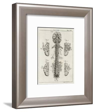 Brain and Spinal Column-A^ Bell-Framed Premium Giclee Print