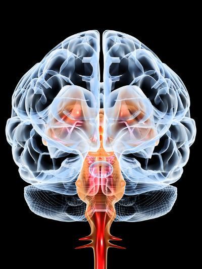 Brain, Artwork-PASIEKA-Photographic Print