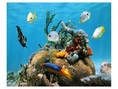 Brain Coral With Tropical Fish--Art Print