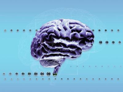 Brain-Coneyl Jay-Photographic Print