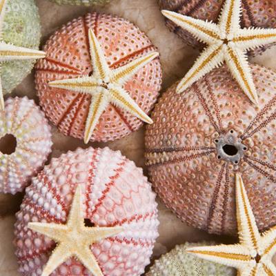 Starfish & Sea Urchins