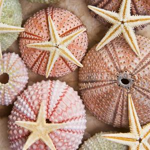 Starfish & Sea Urchins by Bramwell