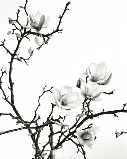 Branch of Magnolia-Henry Wilson-Art Print