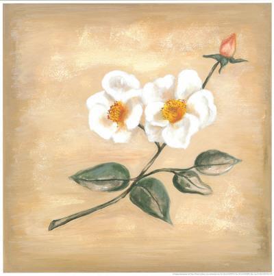 https://imgc.artprintimages.com/img/print/branch-of-white-flower-ii_u-l-f4y2la0.jpg?p=0