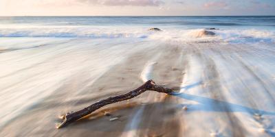 Branch on the Sea-Robert Maynard-Photographic Print