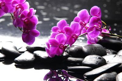 https://imgc.artprintimages.com/img/print/branch-purple-orchid-flower-with-therapy-stones_u-l-q1035uz0.jpg?p=0
