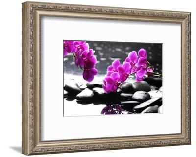 Branch Purple Orchid Flower With Therapy Stones-crystalfoto-Framed Photographic Print