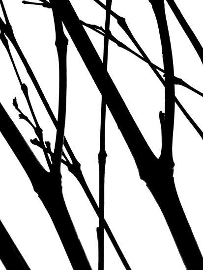 Branch Silhouette I-Monika Burkhart-Photographic Print