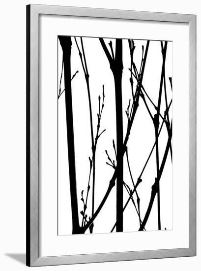 Branch Silhouette IV-Monika Burkhart-Framed Photographic Print
