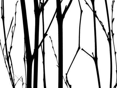 https://imgc.artprintimages.com/img/print/branch-silhouette-vi_u-l-q11ur7m0.jpg?p=0