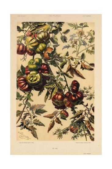 Branches of Fruit--Art Print