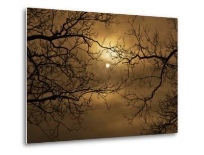 Branches Surrounding Harvest Moon-Robert Llewellyn-Metal Print