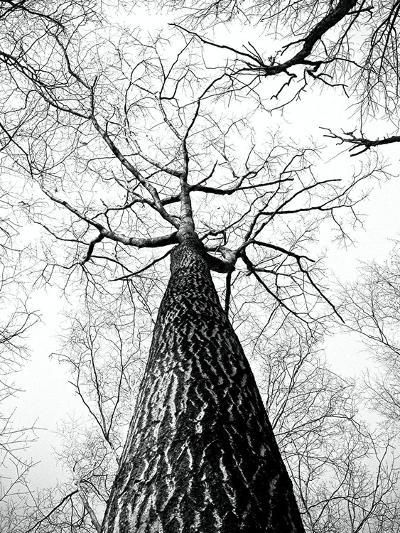 Branches Tree Nature Landscape-Wonderful Dream-Art Print