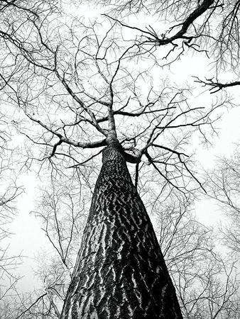 https://imgc.artprintimages.com/img/print/branches-tree-nature-landscape_u-l-f8qhl90.jpg?p=0