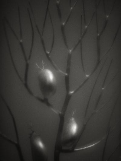 Branching Kelp-Henry Horenstein-Photographic Print
