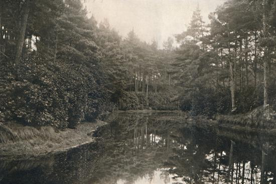 'Branksome Chine and Lake', c1910-Unknown-Photographic Print