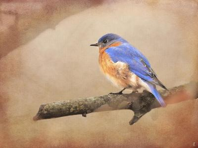 Braving Autumn Bluebird-Jai Johnson-Giclee Print