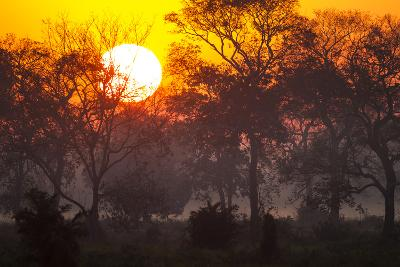 Brazil, Mato Grosso, the Pantanal, Pouso Alegre. Sunset Through Ipe Trees-Ellen Goff-Photographic Print