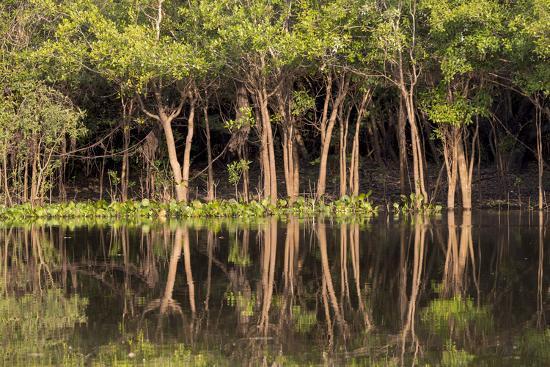 Brazil, Mato Grosso, the Pantanal, Rio Negro. Trees Along the Rio Negro-Ellen Goff-Photographic Print