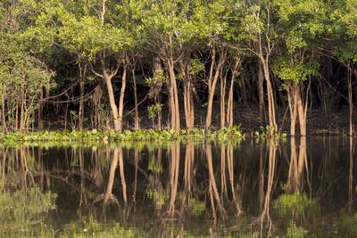 https://imgc.artprintimages.com/img/print/brazil-mato-grosso-the-pantanal-rio-negro-trees-along-the-rio-negro_u-l-q13bi8g0.jpg?p=0