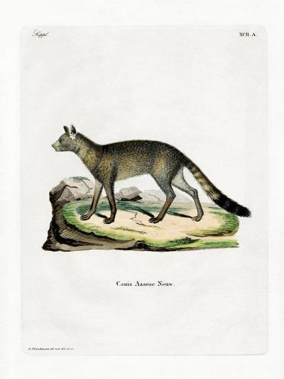 Brazilian Fox--Giclee Print