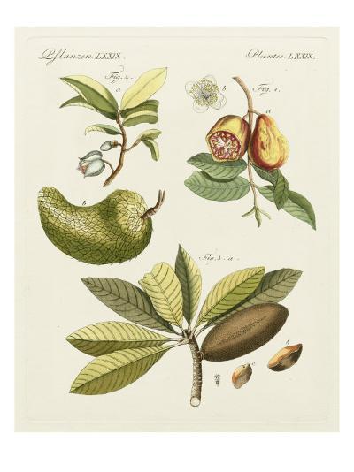 Breadfruit-Bertuch-Art Print