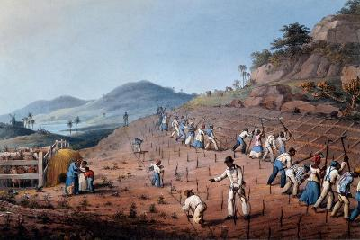 Breaking Up the Land, from 'ten Views in the Island of Antigua', 1823-William Clark-Giclee Print