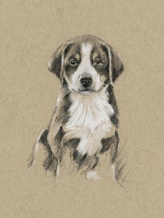 https://imgc.artprintimages.com/img/print/breed-sketches-ii_u-l-pyvx9m0.jpg?p=0