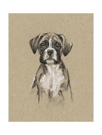 https://imgc.artprintimages.com/img/print/breed-sketches-v_u-l-pyvxay0.jpg?p=0
