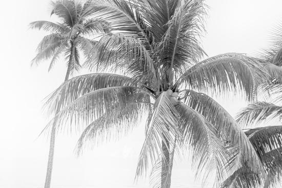 Breezy II-Elizabeth Urquhart-Photographic Print
