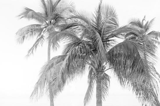 Breezy IV-Elizabeth Urquhart-Photographic Print