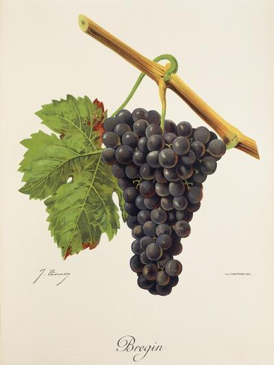 Bregin Grape-J. Troncy-Giclee Print