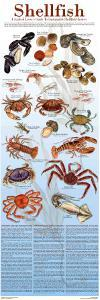 A Seafood Lover's Guide to Sustainable Shellfish Choices by Brenda Gillespie