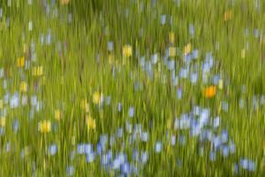 An abstract of a field of flowers in Spring bloom. by Brenda Tharp