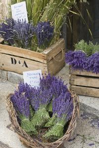 France, Provence, Sault. Bunch of Cut Lavender for Sale at a Shop by Brenda Tharp