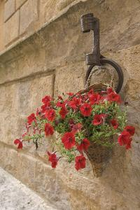 Italy, Tuscany, Pienza. Colorful Petunias Spill from a Basket on a Stone Wall by Brenda Tharp