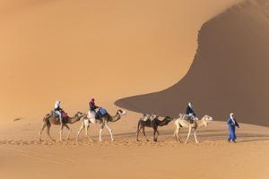 Morocco. Tourists ride camels in Erg Chebbi in the Sahara desert. by Brenda Tharp