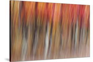Motion blur of autumn-hued forest, Wisconsin by Brenda Tharp