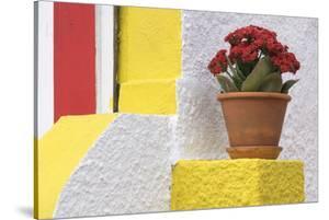 Portugal, Costa Nova do Prado. Colorful house with flowering plant on step. by Brenda Tharp