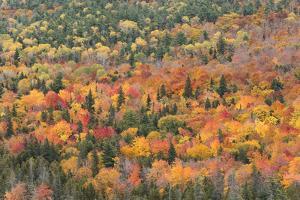 USA, Michigan. Autumn foliage in the Keweenaw Peninsula. by Brenda Tharp
