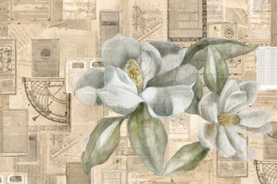 Academic Magnolia Illustration by Brenna Harvey