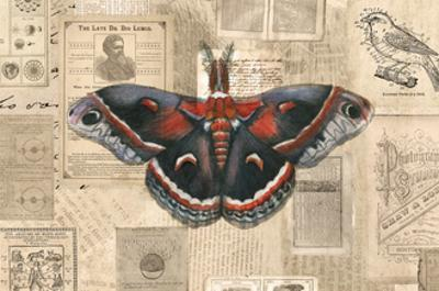 Academic Moth Illustration by Brenna Harvey