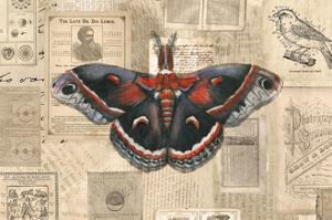 Academic Moth Illustration by Brenna Harvey