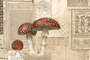 Academic Mushroom Illustration by Brenna Harvey