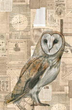Academic Owl Illustration by Brenna Harvey