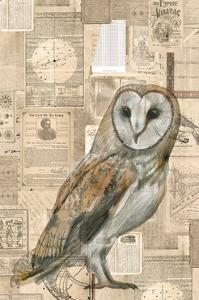 Academic Owl Illustration by Brenna Harvey