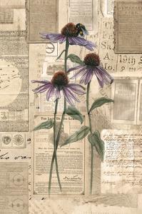 Academic Purple Wildflower Illustration by Brenna Harvey