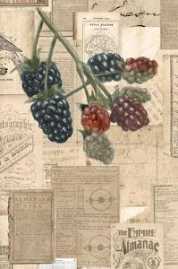 Academic Raspberry Illustration by Brenna Harvey
