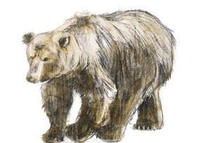 Brown Bear 1 by Brenna Harvey