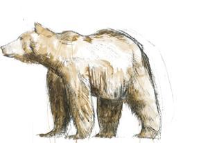 Brown Bear 2 by Brenna Harvey